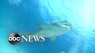 Mom's frantic 911 call released after Florida shark attack