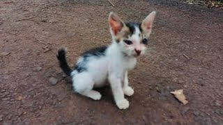 A Small And Sad Kitten Standing On The Side Of The Road Waiting For Help