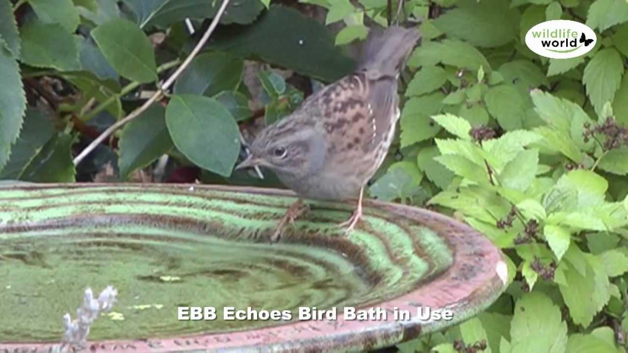 Velké blak ptáky