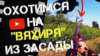 Охота на Вяхиря из посадки в засаде. Охота на Кубани 2018
