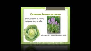 Презентация на тему Мир растений. 3 класс