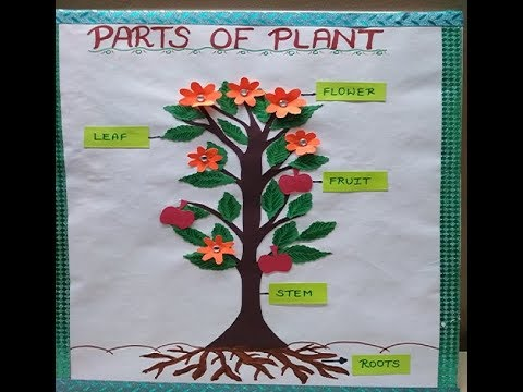 Parts of Plant Model for Students | Easy Model for kids | Science Model