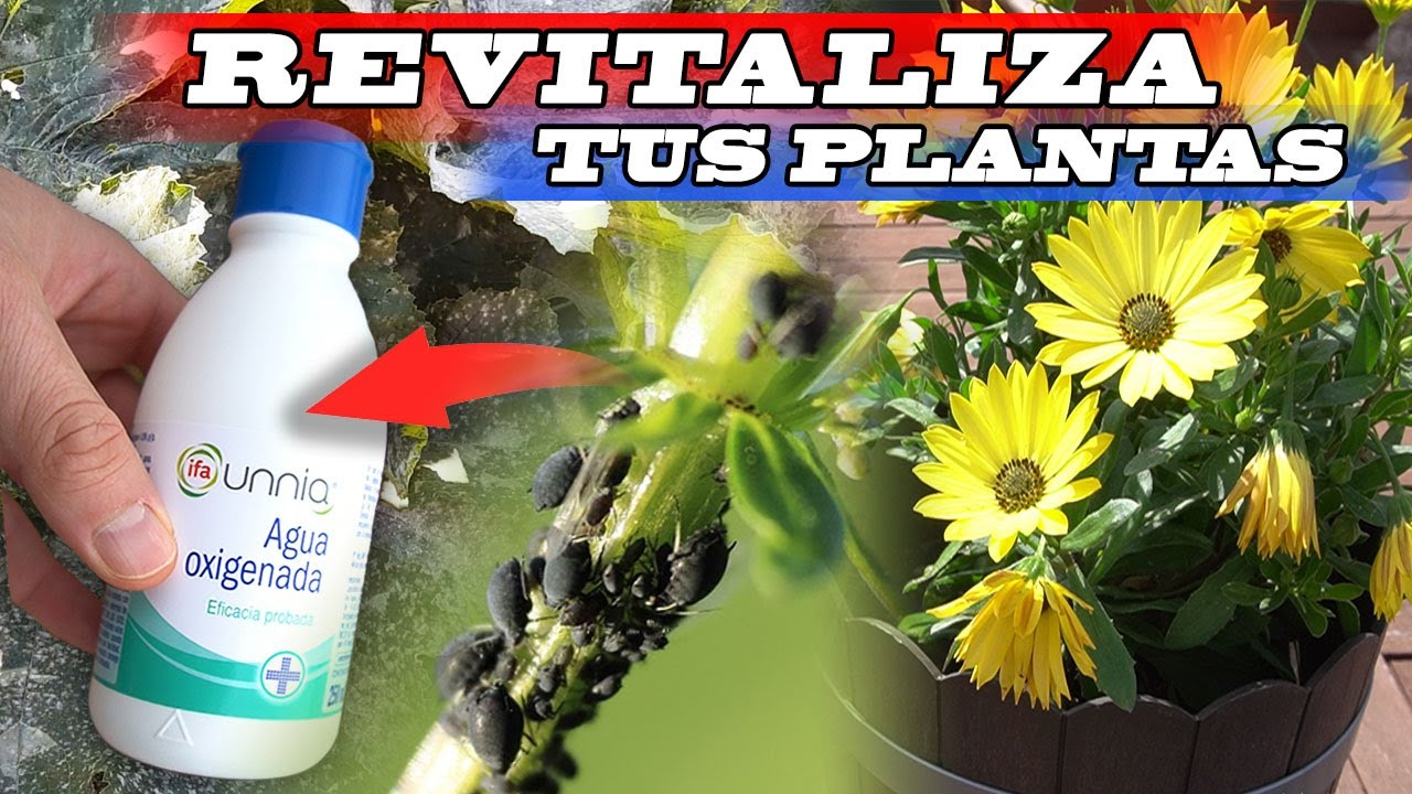 DESCUBRE qué les PASA A TUS PLANTAS si añades AGUA OXIGENADA. Son 8 PRACTICARLAS.