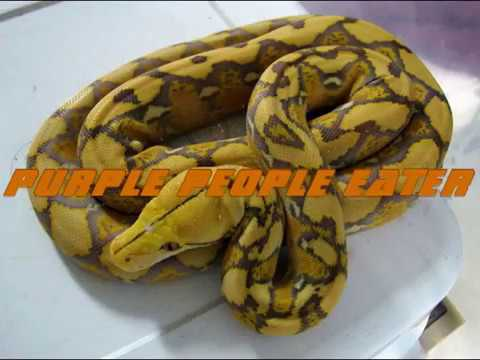 A Z Reticulated Python Morphs Youtube