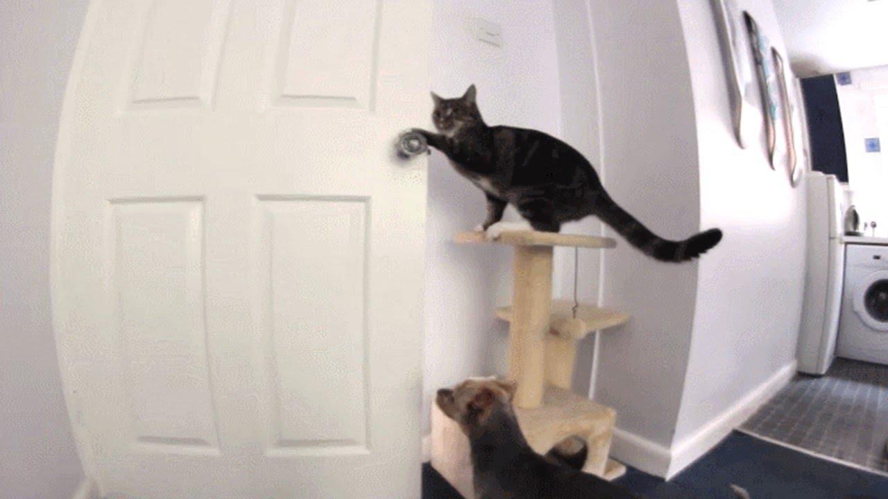 Gato abre la puerta increible youtube for Puertas para animales