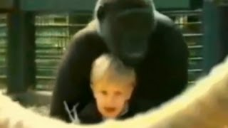 Toddler Plays With Gorilla: Caught on Tape | Good Morning America | ABC News