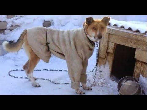 Собака два дня отказывалась заходить в будку. Только заглянув вовнутрь хозяйка поняла причину!