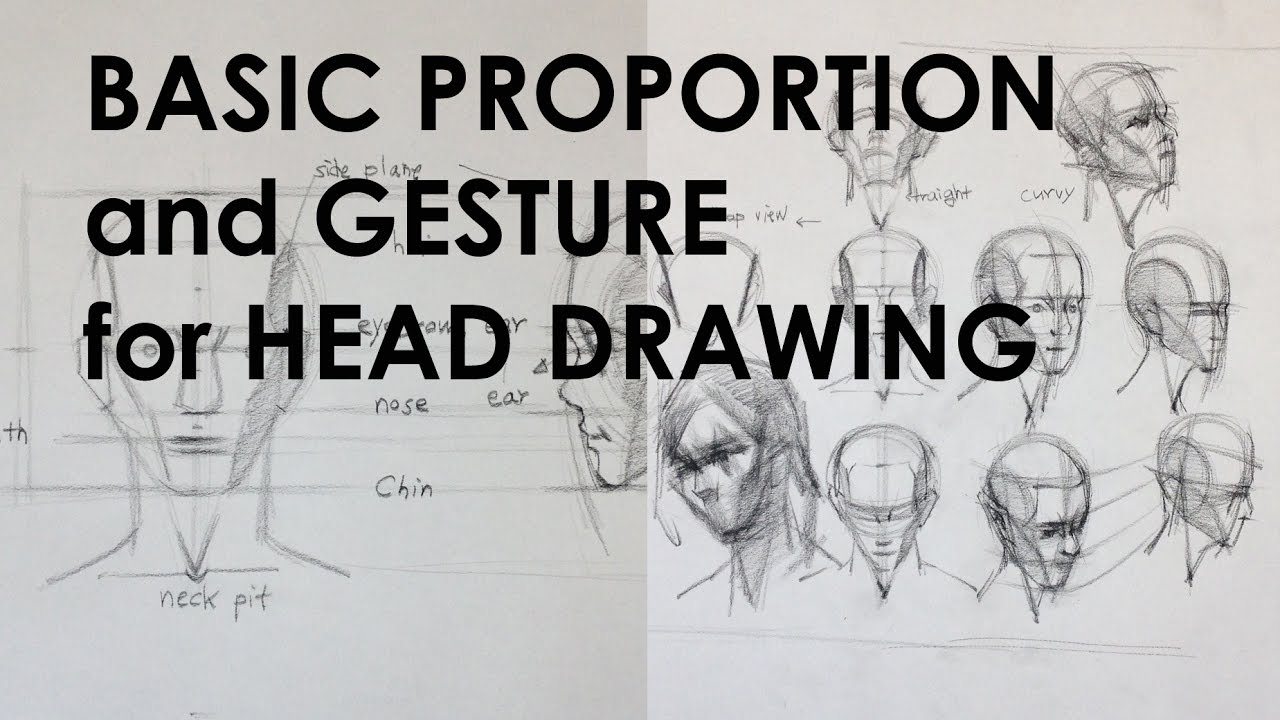 basic proportion and gesture for head drawing youtube