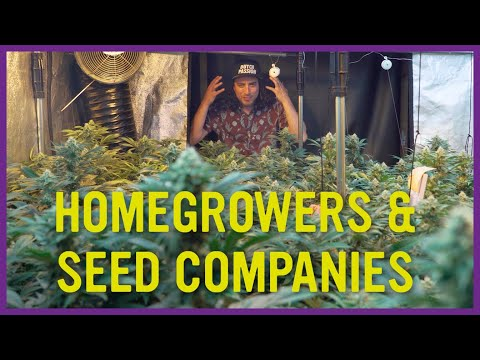 HomeGrowers and Seed Companies