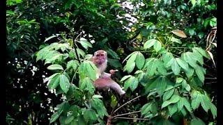 Eko Brunei - Adventure