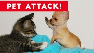 Funniest Animal Attacks Compilation July 2017 | Funny Pet Videos