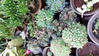 Types of Cactus - Oye Nursery