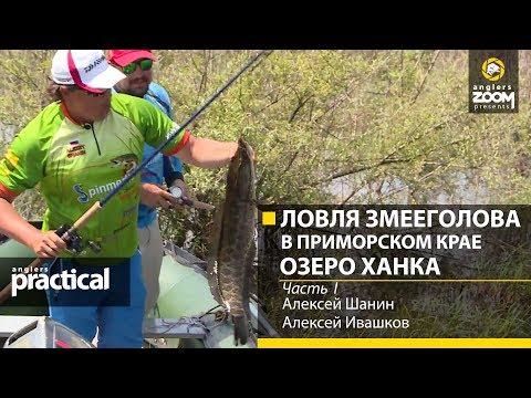 Как ловить змееголова на лягушку в приморье видео