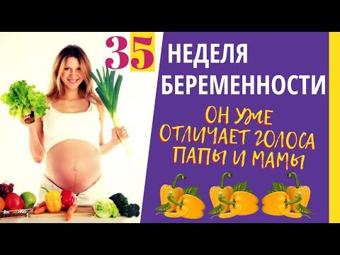 Как выглядит ребенок в 35 недель беременности