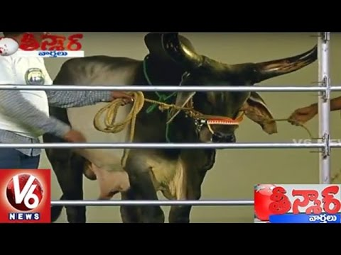 Bulls Fashion Show in Hyderabad | Teenmaar News | V6 News