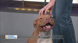 Berkeley Animal Center brings Mario as our News 2 Pet of the Day