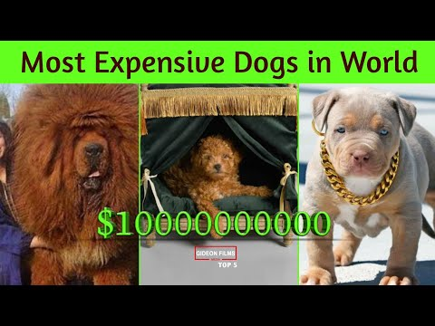 25 Most Expensive Dog Breeds In The World | World's expensive Dog | Expensive Dog Price