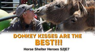 Horse Shelter Heroes | S2E7 | Full Episode