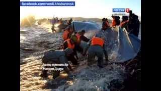 """Вести-Хабаровск. Фильм """"Живая стена"""""""