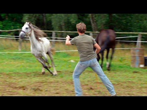Doku Pferde
