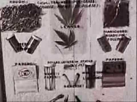 Drugs Of The 1960s Cocaine  Eric Clapton