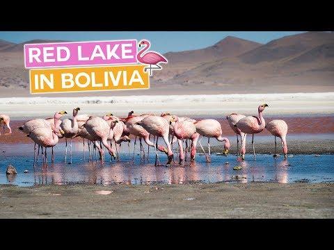 Breathtaking Flamingo Red Lake in Bolivia
