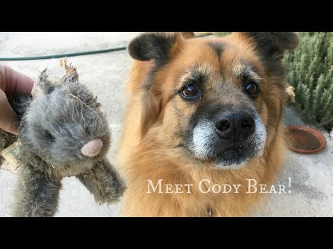 Where we meet Cody Bear and have a little chat from YouTube · Duration:  3 minutes 19 seconds