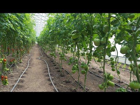 Vegetable Farm Economics with Conor Crickmore of Neversink Farm