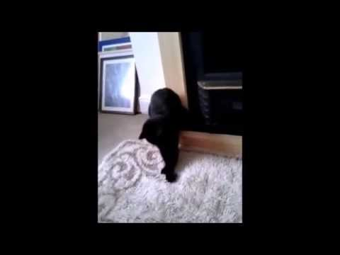 SHORT CAT DANCE