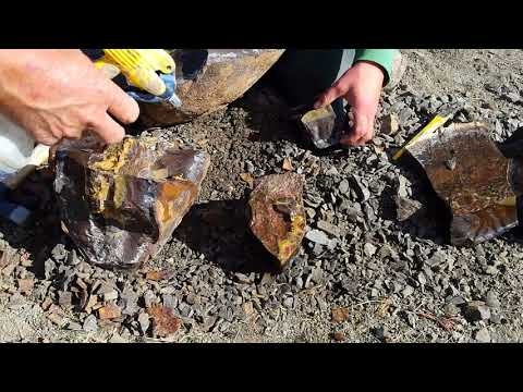 Finding Gem Material In An Alberta Ammonite Concretion