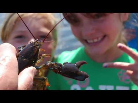 #OceanRunnerNH: The American Lobster