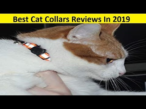 top-3-best-cat-collars-reviews-in-2019