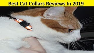 Top 3 Best Cat Collars Reviews In 2019