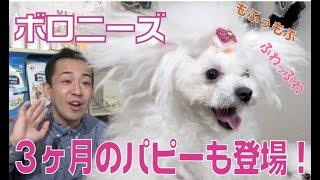 番組提供:ペットライン株式会社 http://www.petline.co.jp/ 今回はわん...