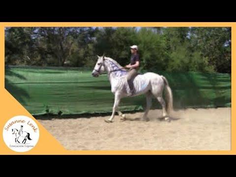 anatomía-del-caballo:-la-columna-vertebral,-parte-3:-anatomía-en-movimiento,-biomecánica-del-dorso