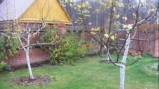 И в саду, и в огороде - 07.10.19 Подготовка к зиме
