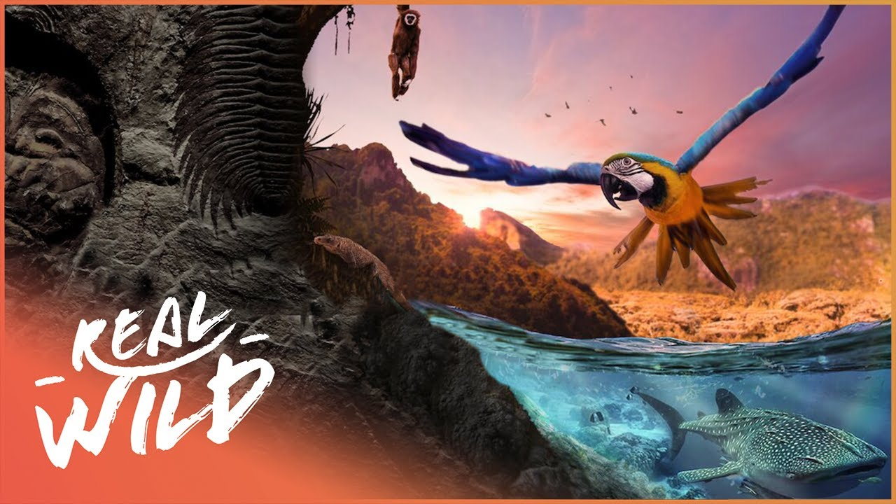 Evolution: The Incredible Animal Kingdom (Wildlife Documentary)   Evolution   Real Wild