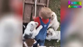 Funny Animals Attacking People   Funny Animals Video 2018