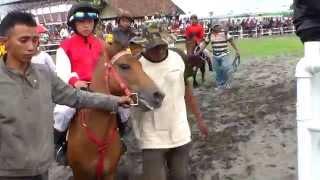 ♞♞♞♞♞ Pacuan Kuda Istimewa Piala Sultan HB X, Kuda Poni dan Joki Cilik 11
