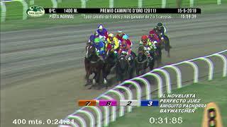 Vidéo de la course PMU PREMIO CAMINITO D'ORO 2011