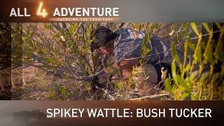 Spikey Wattle: Bush Tucker ► All 4 Adventure TV