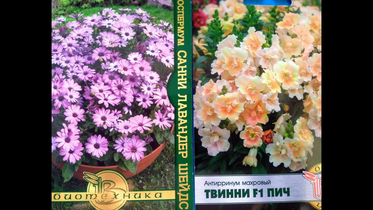 Новинки семян цветов: антирринум, остеоспермум, гвоздика, портулак и другие...