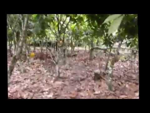 Ghana Mining Program