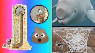 30 Cosas que NO te enseñan en la escuela [2]