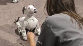 IFA 2018. Robot Aibo. It's better then your real dog.