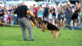 K-9 Demonstration East Greenwich