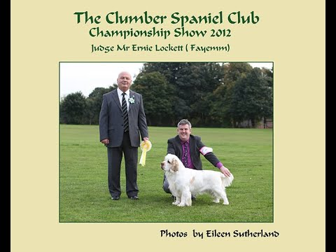 Clumber Club Ch Show 2012