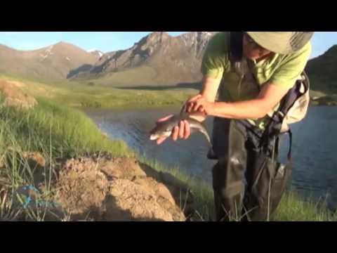 : Форум: Поездка на авто на озеро Хубсугул, Монголия