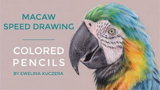 #04 Macaw Speed Drawing