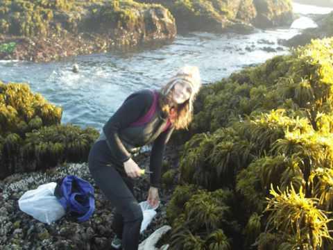 Seaweed- Superfood Of The Sea